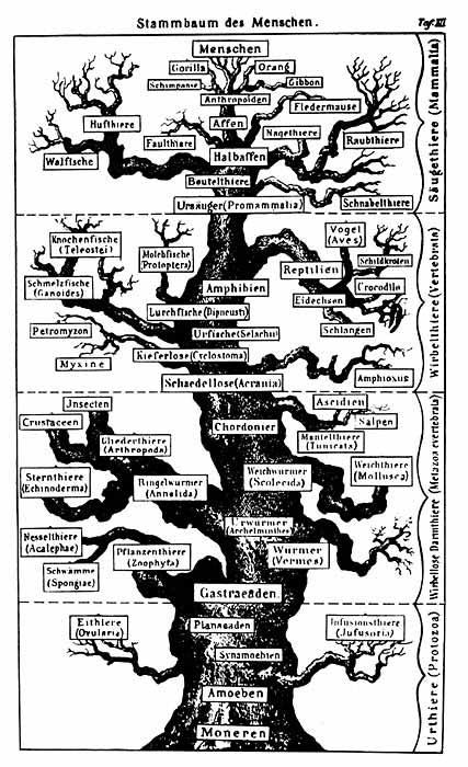Возникновение представлений о родословном древе органического мира имеет столетнюю историю.