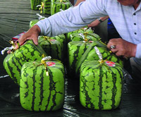 ГМО «празднует свій юбилей.